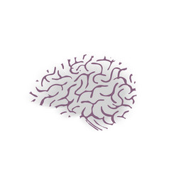 hand drawn brain isolated on white background vector image