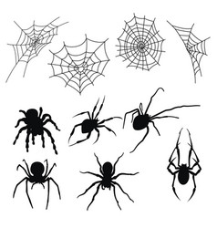 set silhouettes spiders and cobwebs vector image