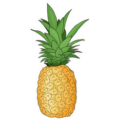 A colored hand drawn pineapple fruit vector