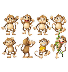 brown monkeys in different actions vector image