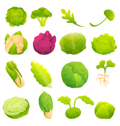 Cabbage icons set cartoon style vector