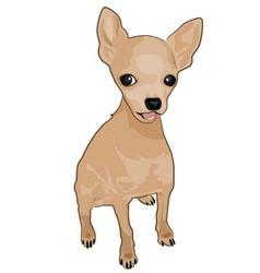 chihuahua vector image