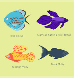 exotic tropical fish different colors underwater vector image