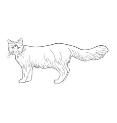 sketch of cat vector image