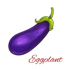 Eggplant vegetable isolated sketch vector image vector image