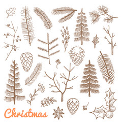 hand drawn fir and pine branches fir-cones vector image vector image