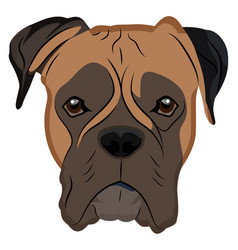 Boxer on white background vector