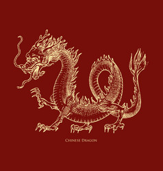 Chinese dragon mythological animal or asian vector