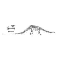 Diplodocus vintage vector