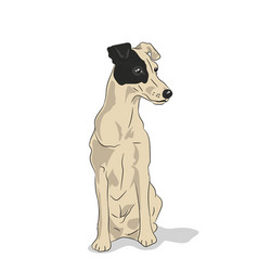 dog sitting vector image