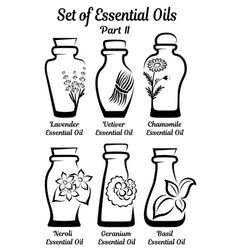 set of stylized bottles with essential oils part 2 vector image