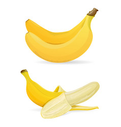 isolated bananas on white background vector image