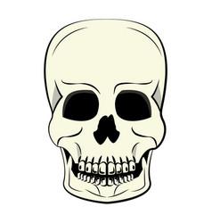 Human skull cartoon vector