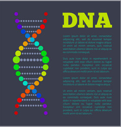 dna chain part in rainbow colors on info poster vector image