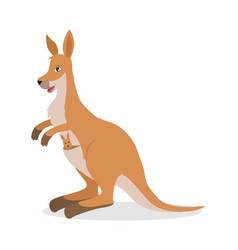 Kangaroo with joey baby in pouch isolated on white vector