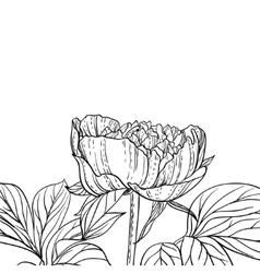 Peonies line art background vector