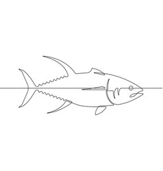 yellowfin tuna fish continuous line graphic vector image