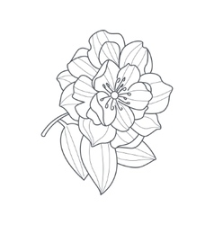 Fully Open Peony Flower Monochrome Drawing For vector image vector image