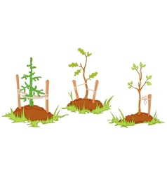 young trees vector image