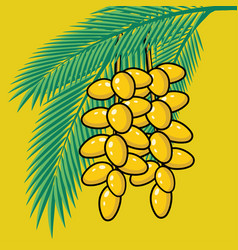fresh dates on palm tree summer tropical fruits vector image