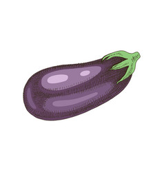 Hand drawn colorful eggplant vector