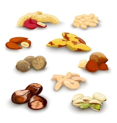 Nuts Decorative Set vector