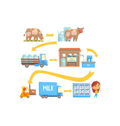 production and processing milk stages set of vector image