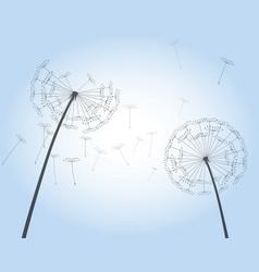 Shape dandelion outline vector