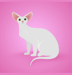 white sitting cat vector image