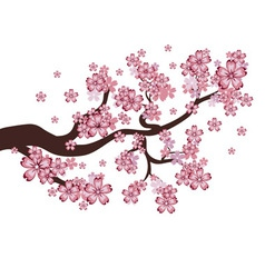 Blooming Sakura Branch vector image