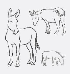 donkey pet animal sketch vector image vector image