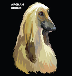 Afghan hound colorful portrait vector