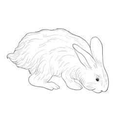 sketch of rabbit vector image