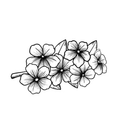 Blossoming tree in graphic black white vector