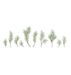 Designer elements set green pine branches vector