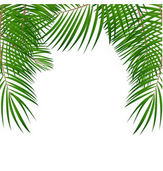 frame with palm leaf background isolated vector image