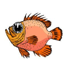 sketch of rockfish vector image