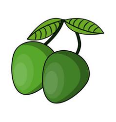 Genips fruit isolated vector