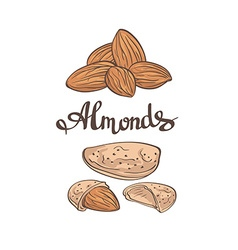 Almondshand drawn vector