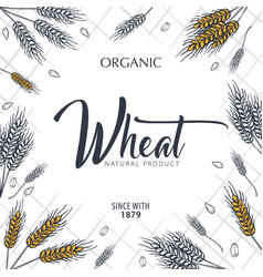 bakery background with wheats linear graphic vector image