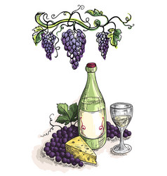 watercolor bottle glass of wine grapes and cheese vector image