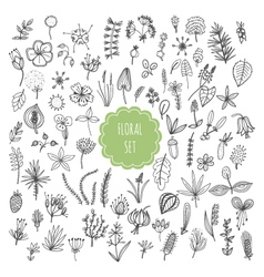 Floral set plants and herbs vector image