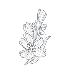 Daffodil Flower Monochrome Drawing For Coloring vector image vector image