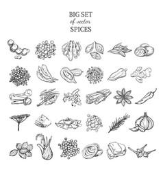 Sketch natural and organic plants set vector