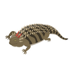 goanna lizard reptile isolated vector image