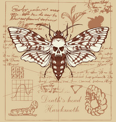 Retro banner with drawing a butterfly dead head vector