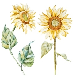 Watercolor sunflowers vector