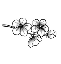 blossoming tree in graphic black white style vector image