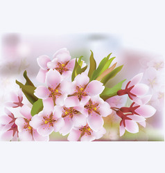 cherry blossom branch spring delicate flowers vector image