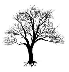 bare tree silhouette vector image vector image
